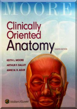 Clinically oriented anatomy. 8-Ed